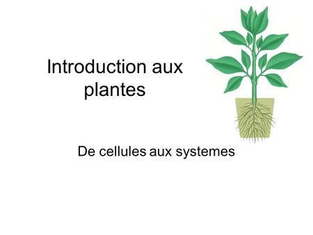 Introduction aux plantes