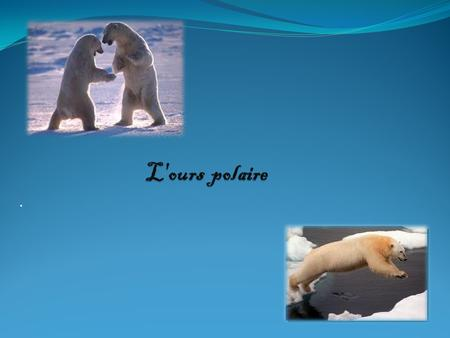 L'ours polaire ..