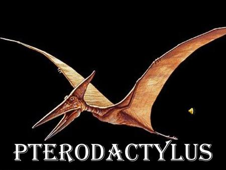"Pterodactylus. ""Pteroda ctylus"" comes from the Greek word meaning ""winged finger."" ""Pterodactylus "" vient d'un mot grec qui signifie ""doigt ailé."""