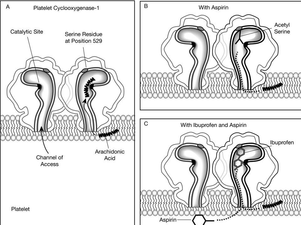 Épidémiologie: effets indésirables 25% des patients qui prennent des AINS ont un effet indésirable 30-40% des saignements gastro- intestinaux sont attribuables aux AINS