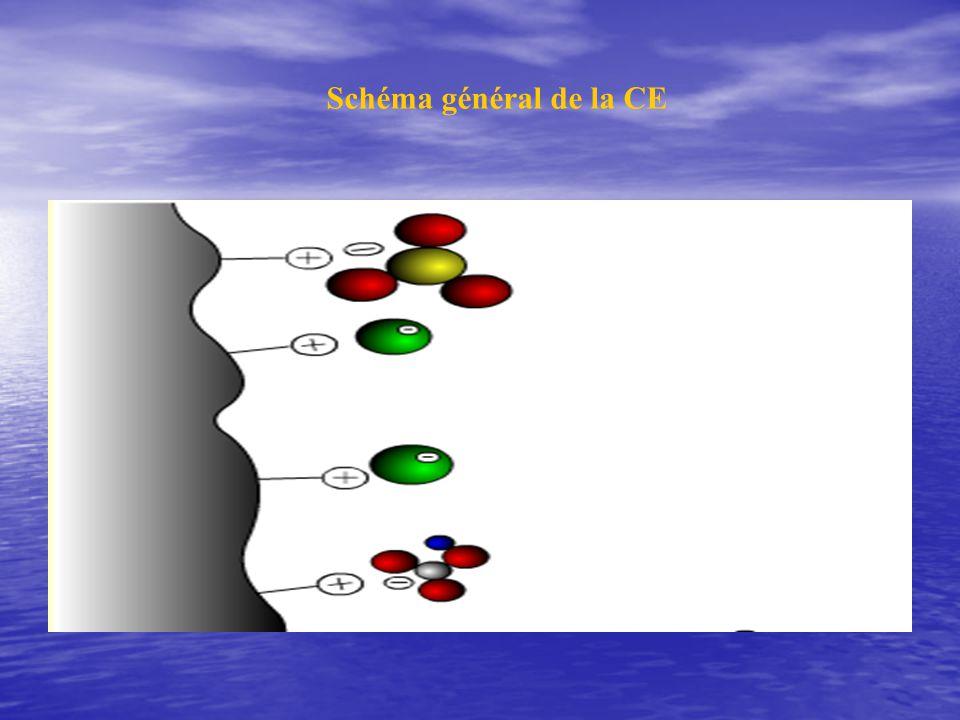 Nature des Chroma é changeuses d ions la nature selon le signe de l ion mobile la nature selon le signe de l ion mobile + é changeuse de cations - é changeuse d anions Ion mobile -+ Groupement fonctionnel