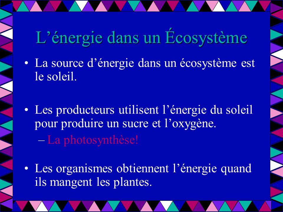 Lénergie dans un Écosystème À chaque niveau de la chaîne, une quantité dénergie est utilisée et perdue en forme de chaleur et les déchets.