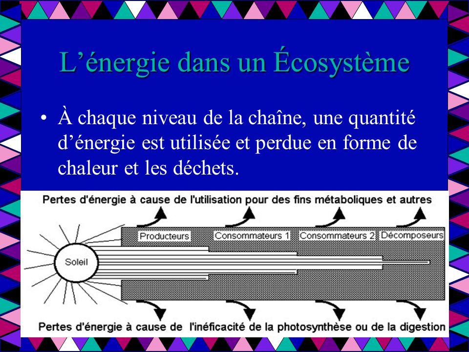 Lénergie dans un Écosystème Seulement une petite partie de lénergie consommé est transformée en tissus chez lorganisme et est disponible pour celui que le consomme.