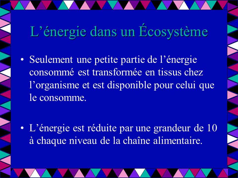 Lénergie dans un écosystème Ceci limite le nombre de niveaux de nimporte quelle à 4 ou 5.