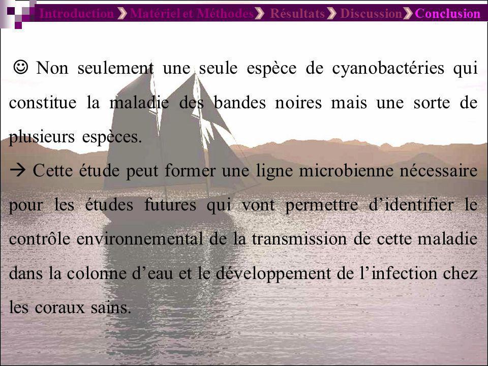 Introduction Matériel et Méthodes Résultats Discussion Conclusion LACUNES Peu détude concernant les maladies de coraux ont été réalisées.