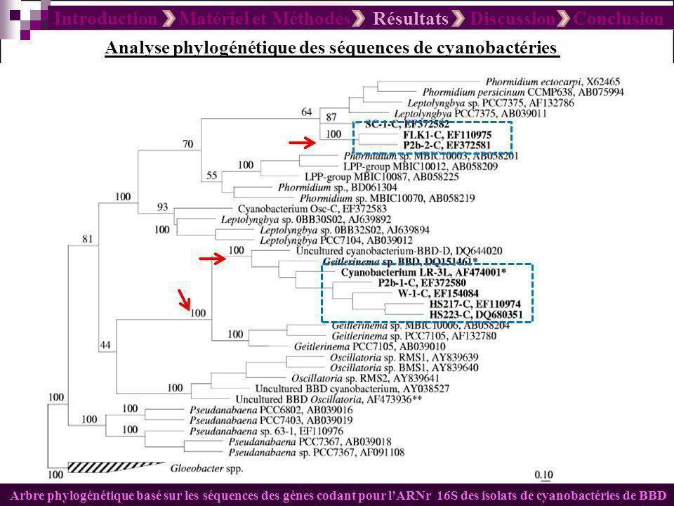 Introduction Matériel et Méthodes Résultats Discussion Conclusion Analyses des échantillons collectés par Electrophorèse (DGGE) E.