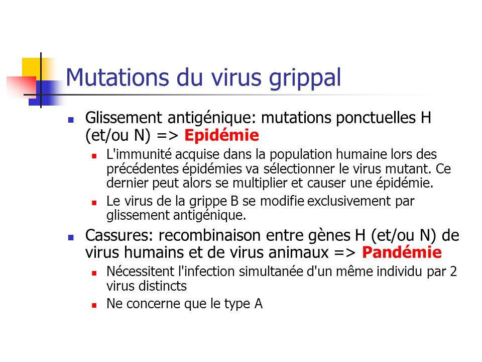 Recombinaison entre sous types humains et animaux Favorisé par promiscuité humains-animaux Facilité par hôte intermédiaire: le porc Sensible à la grippe aviaire et à la grippe humaine Peut aussi se produire directement chez lhomme en cas de co-infection