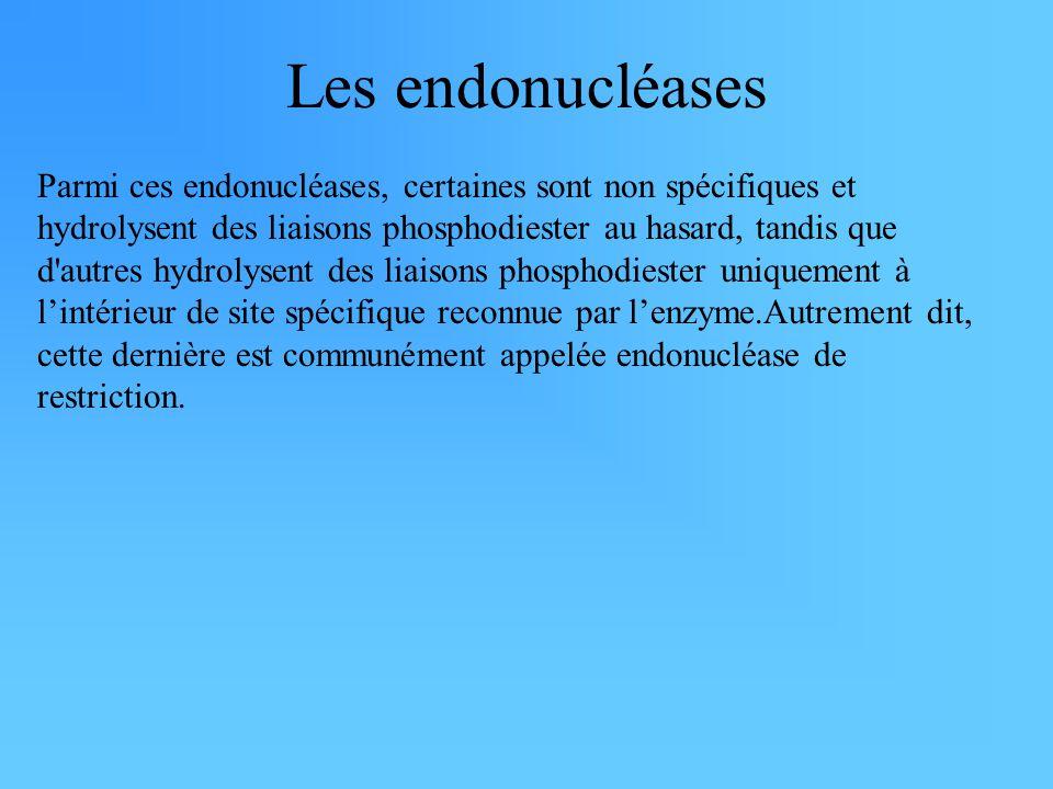 Les endonucléases Parmi ces endonucléases, certaines sont non spécifiques et hydrolysent des liaisons phosphodiester au hasard, tandis que d autres hydrolysent des liaisons phosphodiester uniquement à l'intérieur de site spécifique reconnue par l'enzyme.Autrement dit, cette dernière est communément appelée endonucléase de restriction.