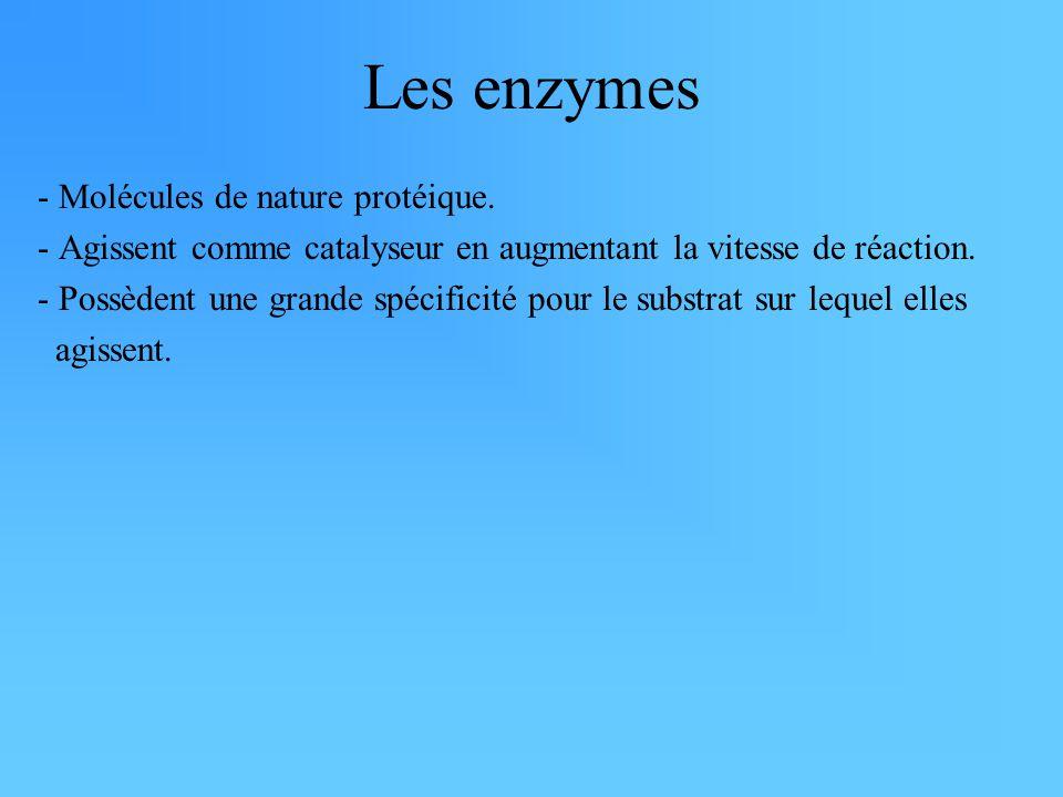 Les enzymes - Molécules de nature protéique.