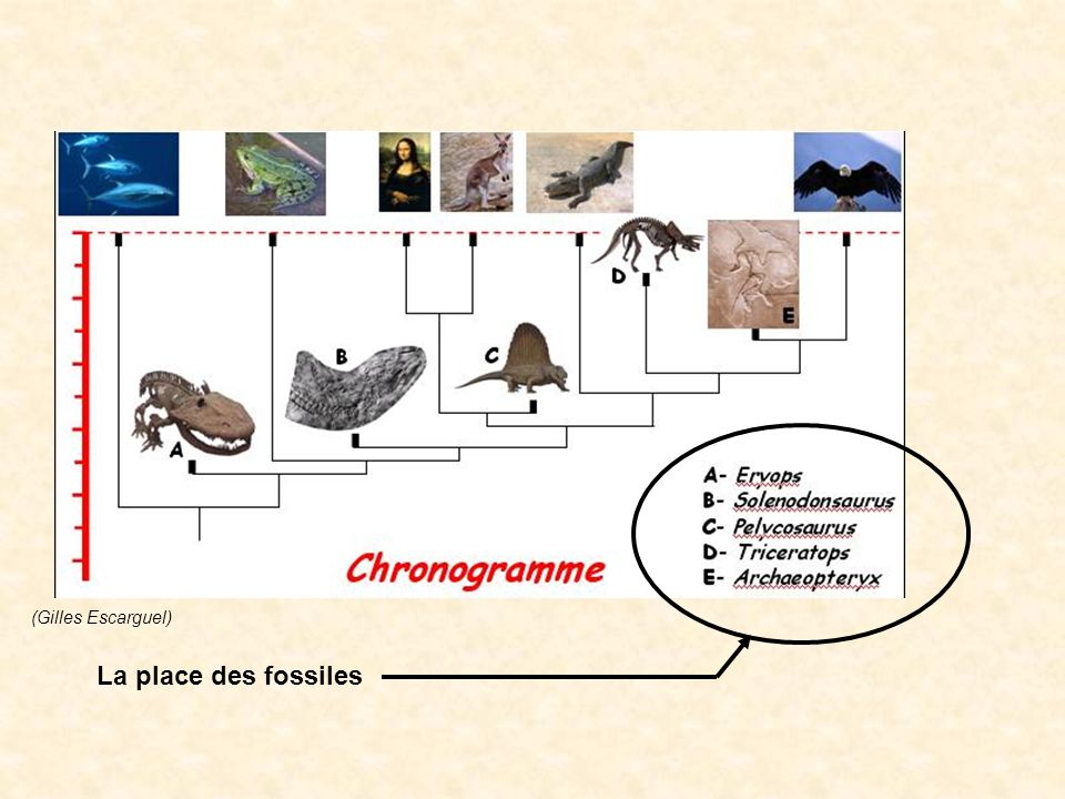 La place des fossiles (manuel TS Belin )
