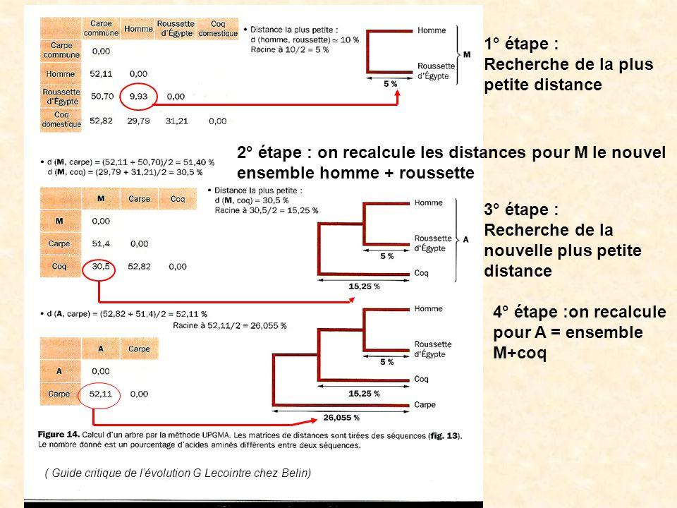 Un phénogramme ( Guide critique de lévolution G Lecointre chez Belin)