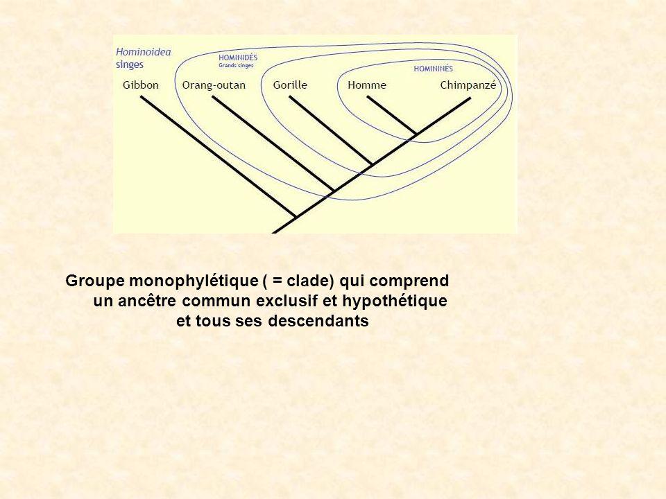 polyphylétique monophylétique paraphylétique GROUPES Pas dancêtre commun exclusif Ancêtre commun exclusif mais pas tous ses descendants (daprès svt.ac-dijon.fr)