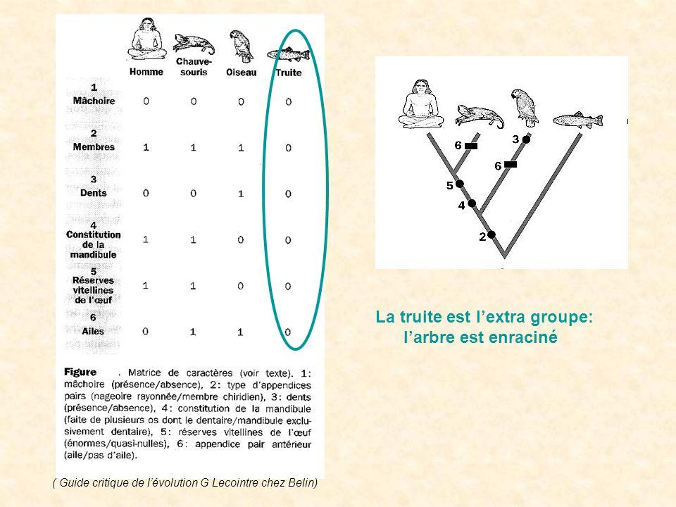 Homologie primaire réfutée Laile est apparue 2 fois dans lhistoire phylogénétique de léchantillon de taxons : cest une homoplasie.