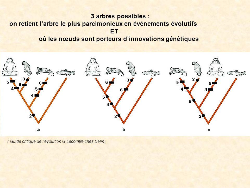 Larbre suivant est le plus parcimonieux en événements évolutifs NB : la parcimonie caractérise larbre et non lévolution .