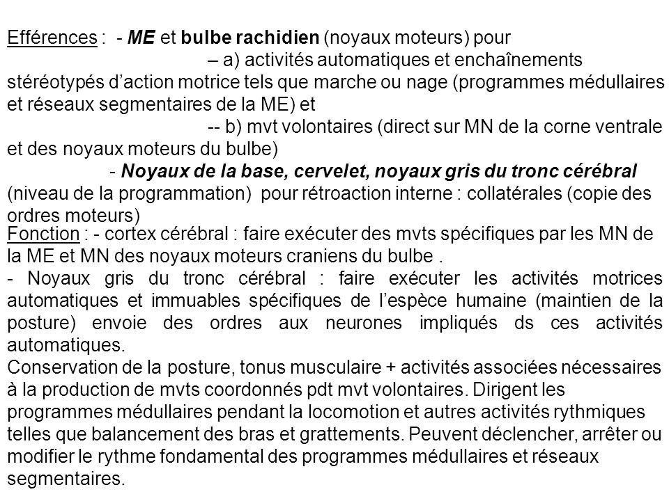 NIVEAU SEGMENTAIRE OU LOCAL Structures : ME et noyaux moteurs craniens du bulbe rachidien + réseaux segmentaires de neurones de la ME et du bulbe rachidien impliqués dans les activités rythmiques.