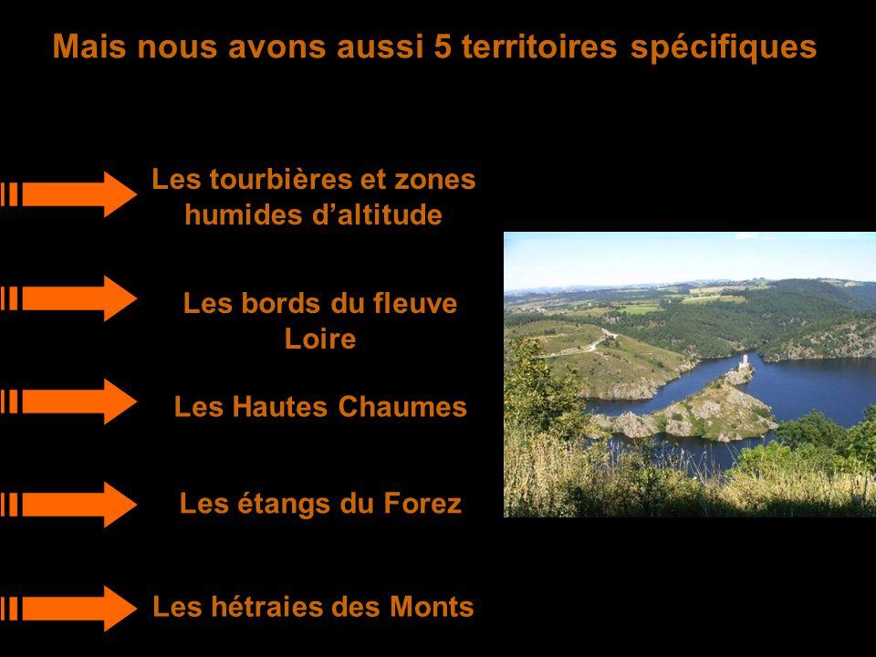Mais nous avons aussi 5 territoires spécifiques Les tourbières et zones humides d'altitude Les bords du fleuve Loire Les Hautes Chaumes Les étangs du Forez Les hétraies des Monts