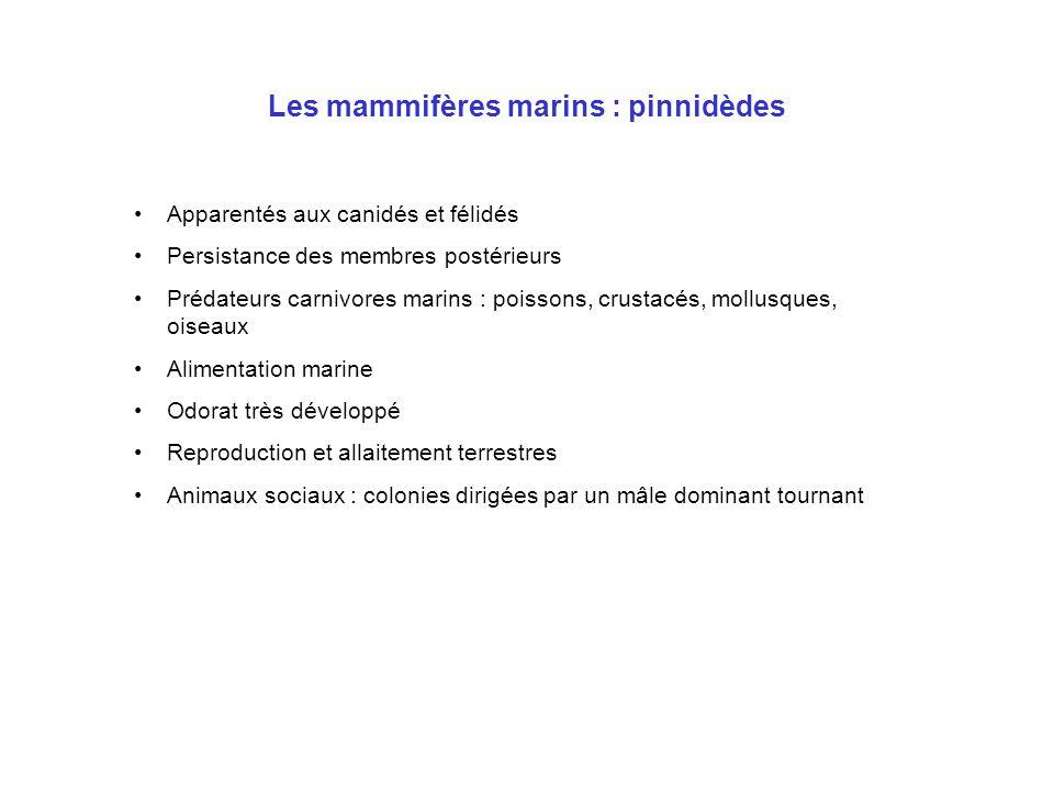Les mammifères marins : pinnipèdes (suite) •Otaries : •oreilles externes •mobilité des membres postérieurs •Morses : •oreilles externes •mobilité des membres postérieurs •défenses •Phoques : •pas d'oreilles externes •pas de mobilité des membres postérieurs