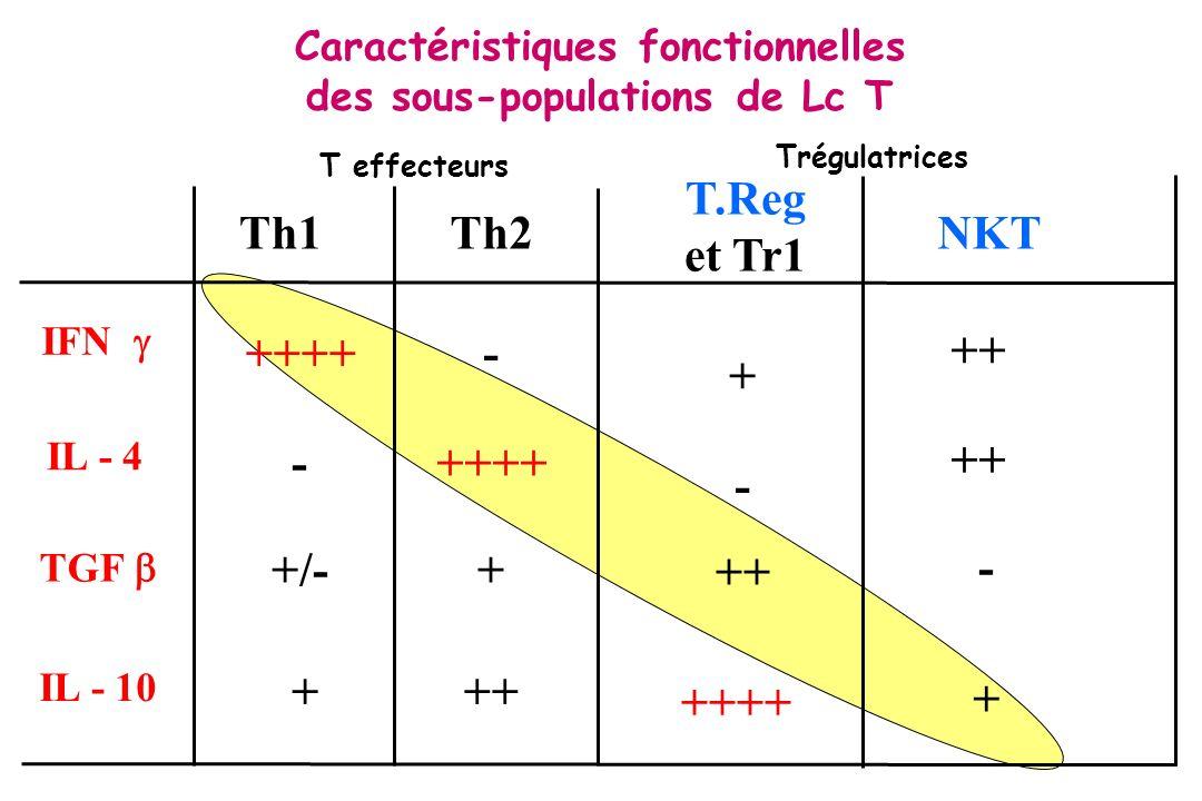 Nouvelle population de cellules T effectrices : Th 17 - Différentes de Th1, Th2 et Treg - Sécrétent IL 17, IL-21, IL- 22 IL-6, TNF -Stabilisées par cellules dendritiques produisant IL-23 (chaine p40 commune entre IL-12 et IL-23) -Fonctions: activation neutrophiles et macrophages proinflammatoires