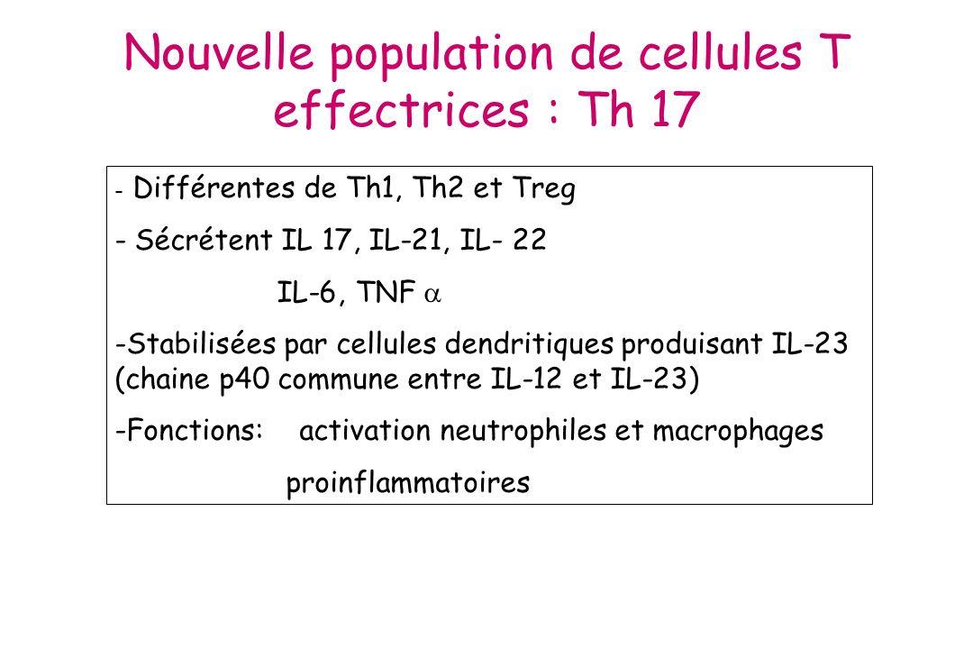 APC= Les Lc T CD4 auxiliaires vont assister les Lc B pour la production danticorps (réponse humorale Thymo-dépendante) Lc B cytokines 2.
