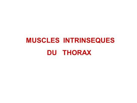 MUSCLES INTRINSEQUES DU THORAX.