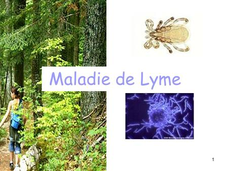 1 Maladie de Lyme. 2 Plan Introduction La maladie –diagnostic –traitement Conduite à tenir –soins immédiats –dans les jours suivants –prévention.