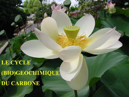 LE CYCLE (BIO)GEOCHIMIQUE DU CARBONE. ? RESERVOIRS DE CARBONE.