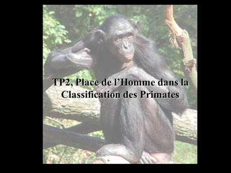 TP2, Place de lHomme dans la Classification des Primates.