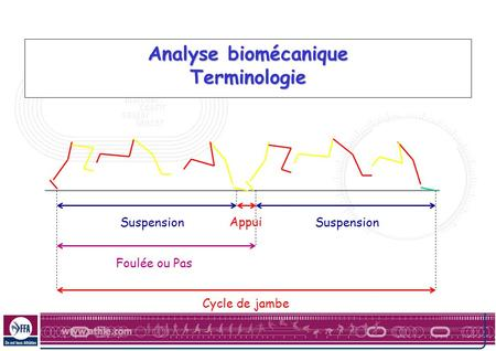 Analyse biomécanique Terminologie