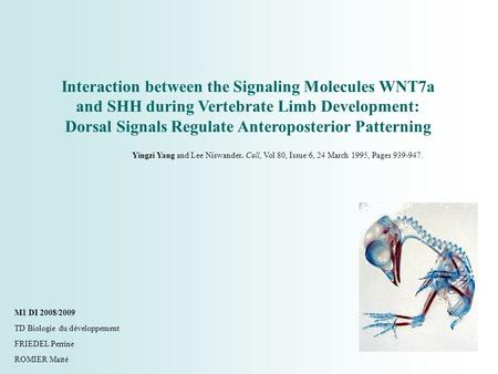 Interaction between the Signaling Molecules WNT7a