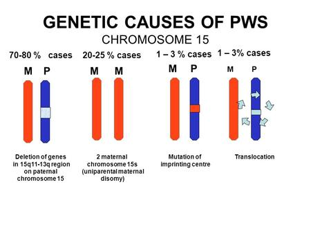 GENETIC CAUSES OF PWS CHROMOSOME 15
