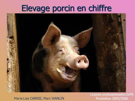 Elevage porcin en chiffre Marie Lise CARRIE, Marc WANLIN Licence professionnelle DVPE Promotion 2005/2006.