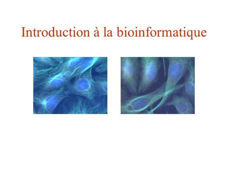 Introduction à la bioinformatique