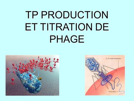 TP PRODUCTION ET TITRATION DE PHAGE. BACTERIOPHAGE P1 Bactériophage = virus infectant des bactéries sensible.