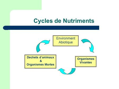 Cycles de Nutriments Environment Abiotique Dechets d'animaux &