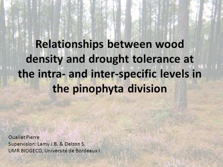 Relationships between wood density and drought tolerance at the intra- and inter-specific levels in the pinophyta division Ouallet Pierre Supervision: