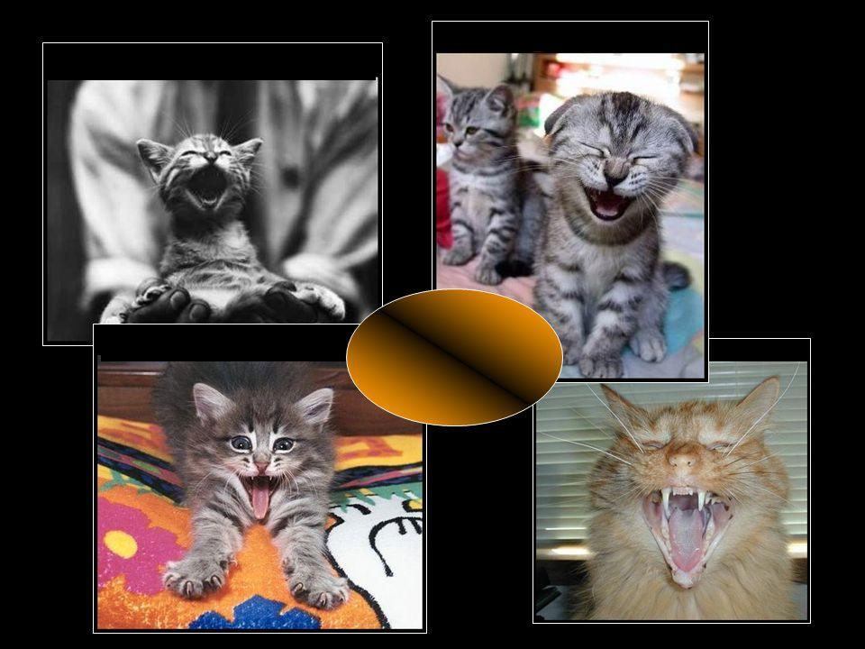 Quand le chat ne se glande pas ou ne râle pas… Il fait l 'andouille !!