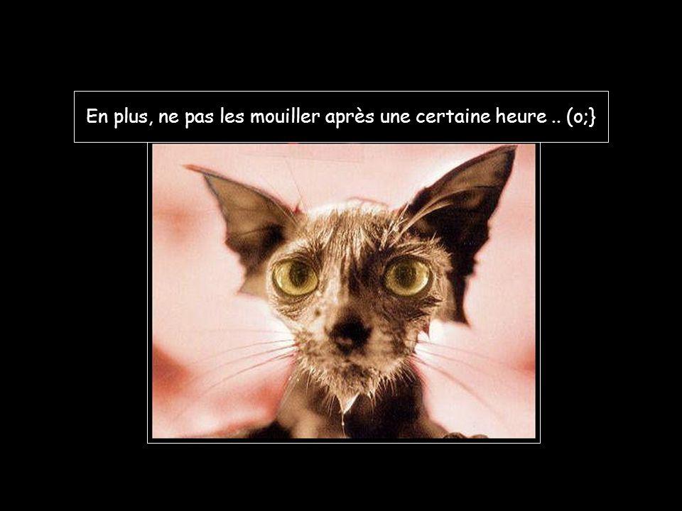 Le chat est un gros râleur, pleurnicheur, et qui n 'en fait qu 'à sa tête…!