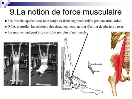 9.La notion de force musculaire