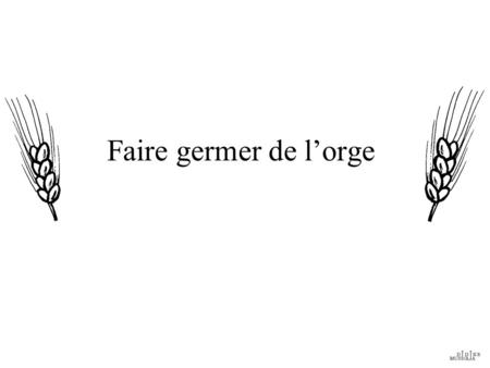 Faire germer de l'orge.