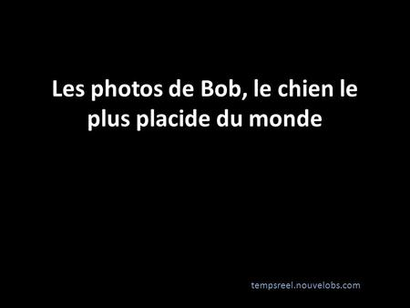 Les photos de Bob, le chien le plus placide du monde