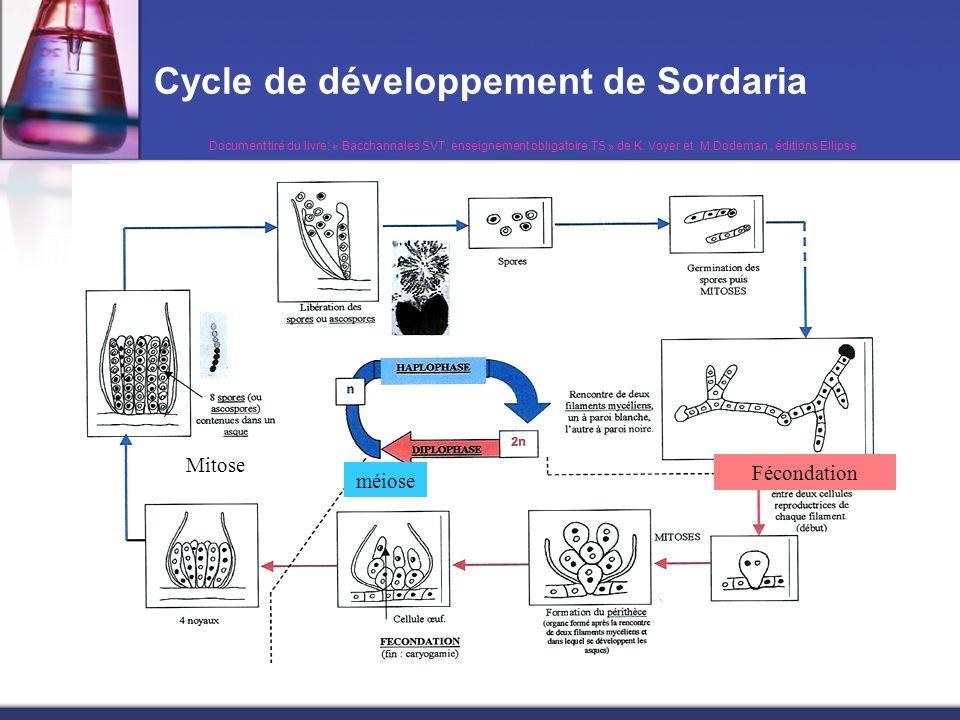 Le brassage inter-chromosomique chez Sordaria On s'attend à trouver deux types d'asques ;résultat de la migration aléatoire des chromosomes homologues lors de l'anaphase 1 de la méiose: c'est la brassage inter-chromosomique
