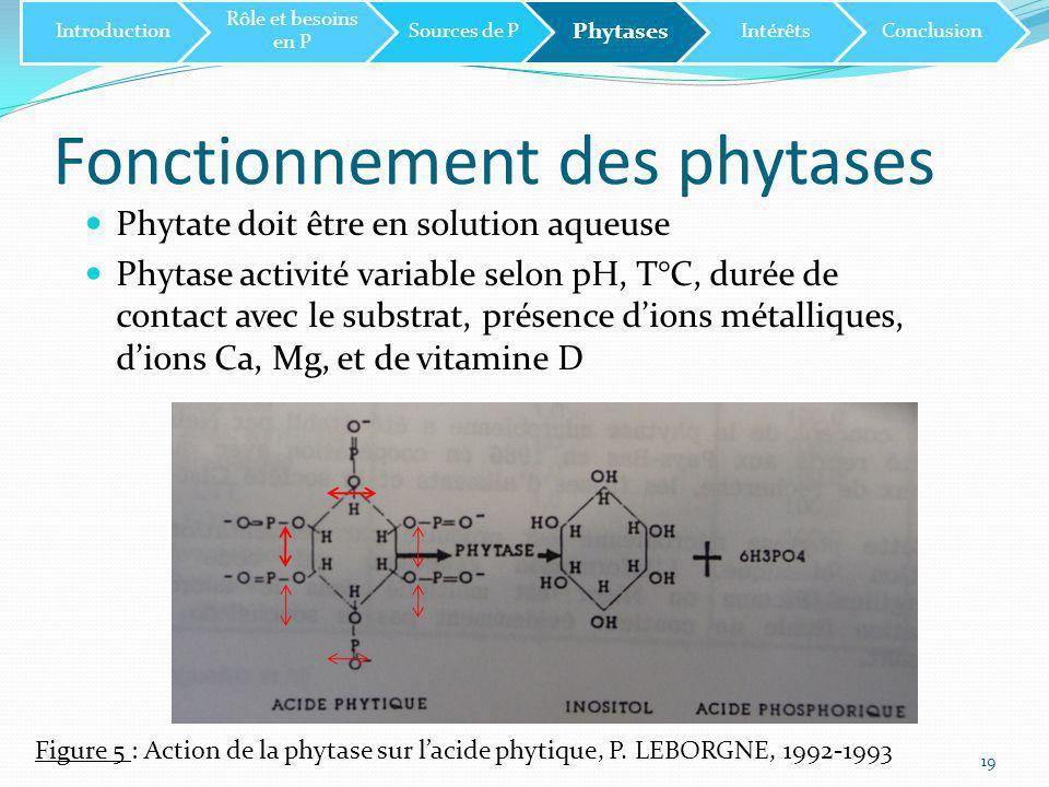 Relation ioniques Lorsqu'il n'y a pas de présence de phytases microbiennes: →précipitation des cations Ca 2+, Cu 2+,Zn 2+ et Mg 2+ avec l'acide phytique →Formation de phytates et diminution de l'absoption au niveau du tissu intestinal Solubilité dans l'eau du phytate: Cu 2+ > Zn 2+ > Ni 2+ > Mn 2+ > Fe 3+ > Ca 2+ Cette solubilité dépend du pH: Plus le pH est bas, plus la solubilité est accrue 20 Introduction Rôle et besoins en P Sources de P Phytases IntérêtsConclusion