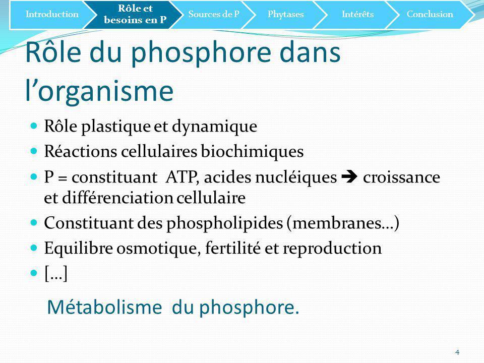 Proportion P = 1% chez l'adulte 25% des MM Répartition : - Tissus osseux = 70-75% - Tissus mous = 20-25% - Fluides Besoins en P = Besoins d'entretien + Besoins Croissance, âge & type de production + Besoins Gestation ou Besoins en lactation 5 Chez le porc : Introduction Rôle et besoins en P Sources de PPhytasesIntérêtsConclusion