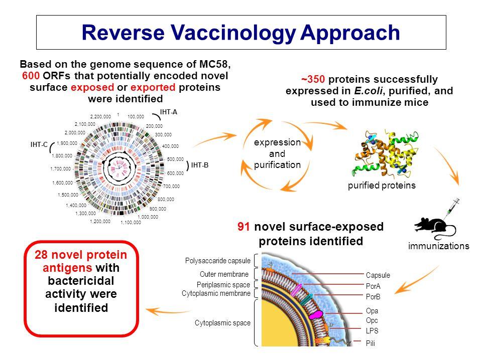 Applications de la « vaccinologie inverse » Méningocoque B: – >600 gènes candidats; 350 antigènes étudiés chez la souris; 28 antigènes identifiés comme inducteurs d'anticorps bactéricides; – 5 gènes retenus au final, codant pour des protéines 'GNA' (genome- derived nesserial antigens): → vaccin méningocoque B Autres applications (en cours de développement): – Staphylocoque doré – Streptocoques A et B – Neisseria gonorrhoeae