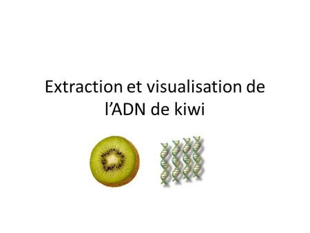Extraction et visualisation de l'ADN de kiwi