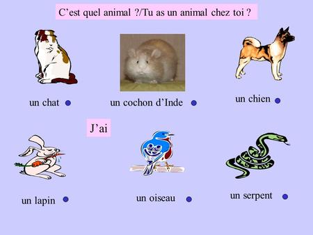 J'ai C'est quel animal ?/Tu as un animal chez toi ? un chien un chat