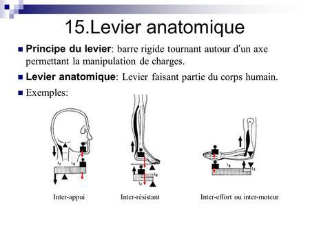 Les dorsalgies dans le domaine des reins le traitement les préparations