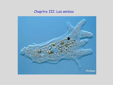 Chapitre III: Les amibes
