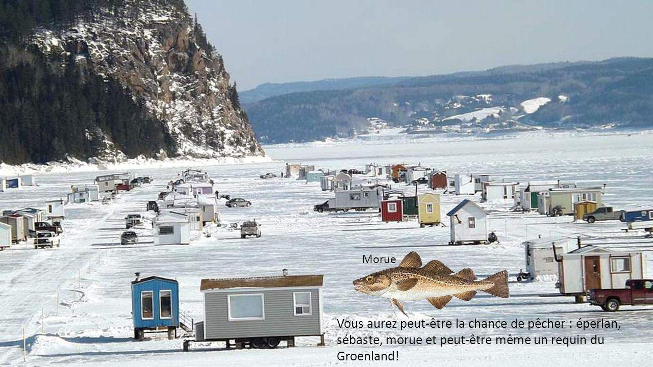 Vous aurez peut-être la chance de pêcher : éperlan, sébaste, morue et peut-être même un requin du Groenland.