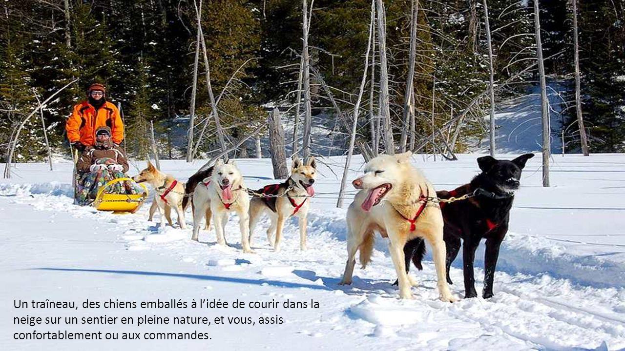 Un traîneau, des chiens emballés à l'idée de courir dans la neige sur un sentier en pleine nature, et vous, assis confortablement ou aux commandes.